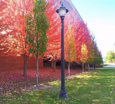 Babbige_Autumn2